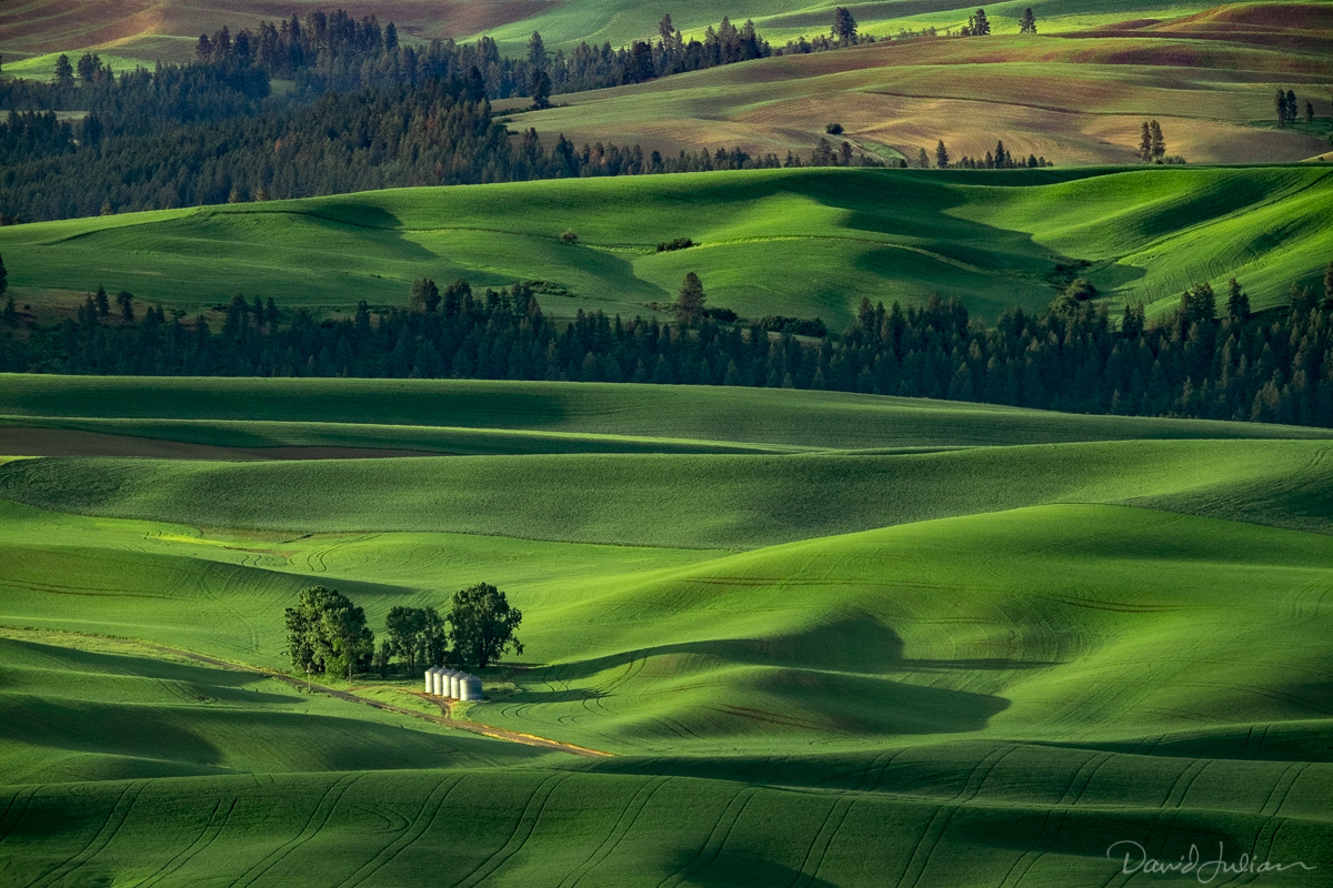 Palouse fields from the butte